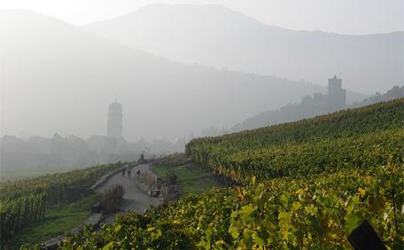 Kaysersberg vue des vignes d'alsace